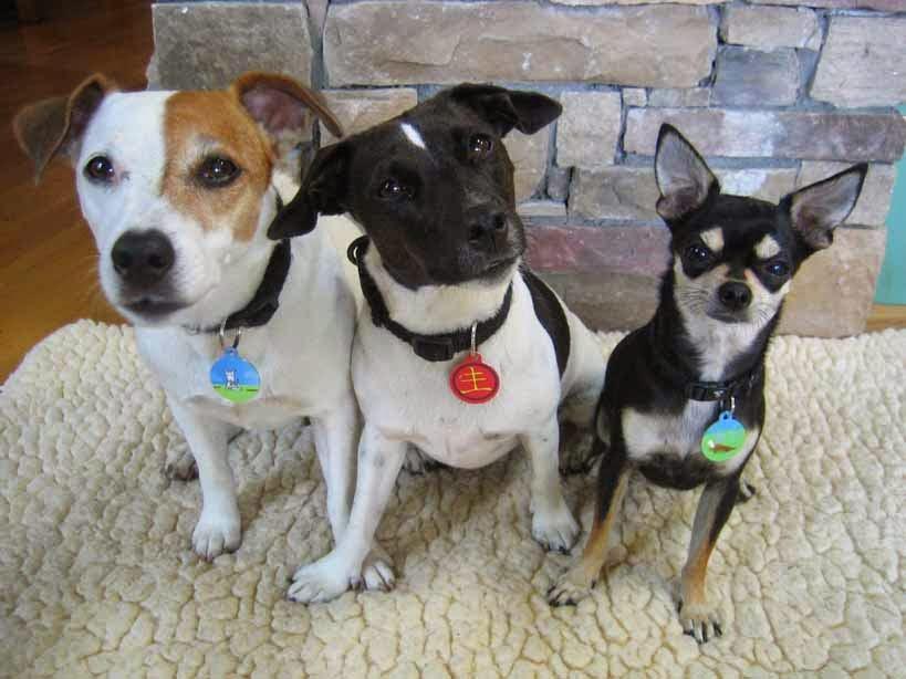 Pasos para ser un dueño responsable de mascotas 3